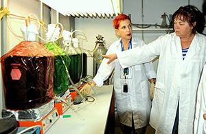 Prof. Nechushtai in her lab