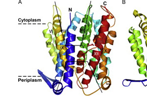 Structure of a membrane protein