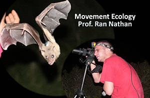 אקולוגיה של תנועה - עבודה עם עטלפים
