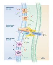 Various types of carriers cooperate to remove toxic substances from the bacterial cell